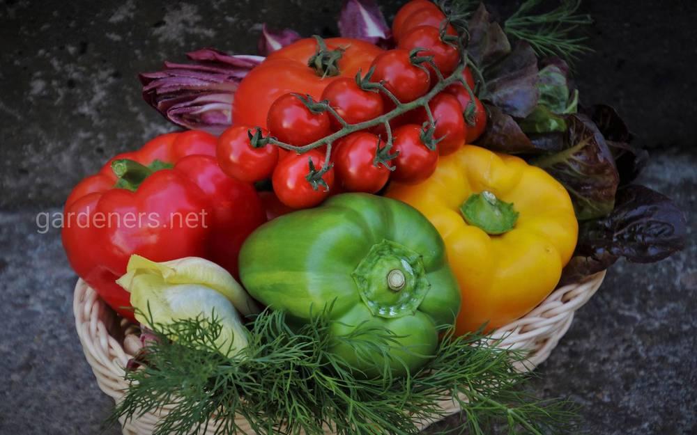 Советы по выращиванию овощей на продажу