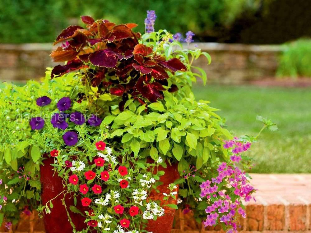 Контейнерный цветочный сад
