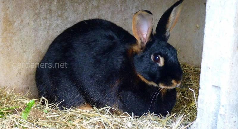 Какими бывают поилки для кроликов