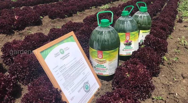 Український проект бізнес-розвитку плодоовочівництва для фермерів та виробників плодоовочевої продукції