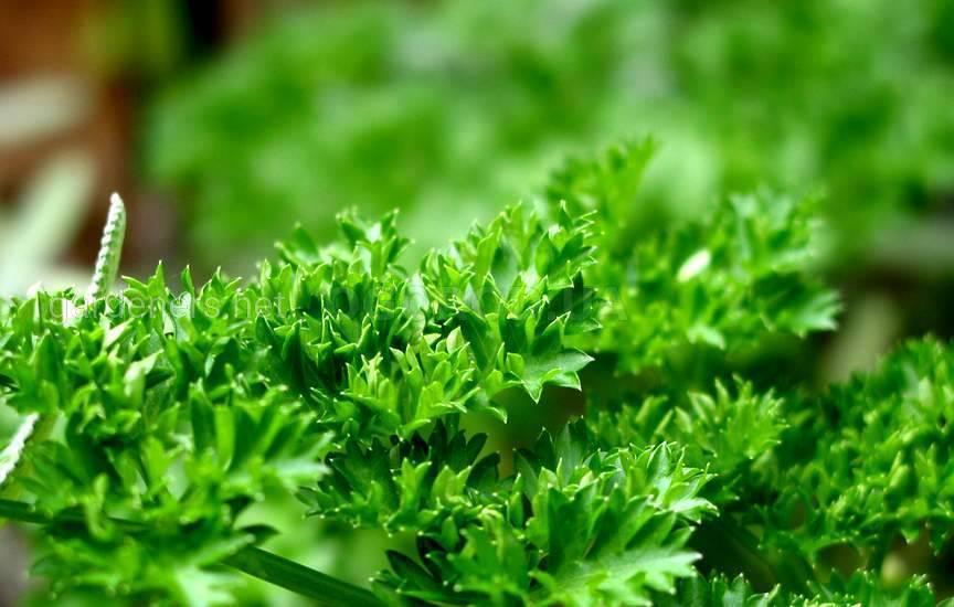 Какую зелень лучше замораживать1