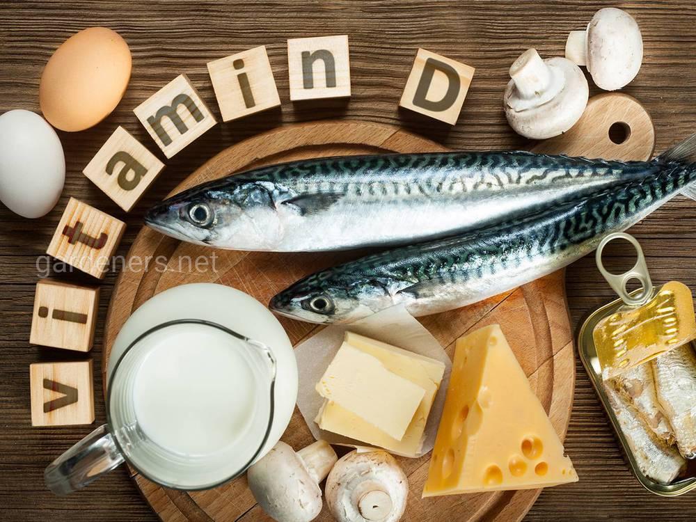 Продукты – источник витамина D