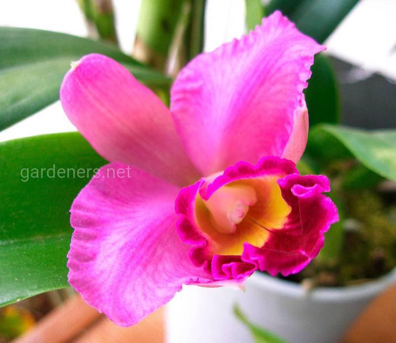 Як вибрати та правильно доглядати за орхідеєю?