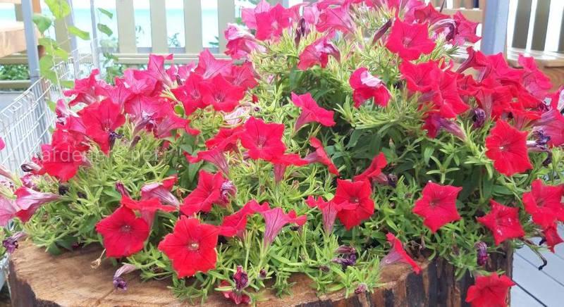 Чурбак - импровизированный контейнер для выращивания растений