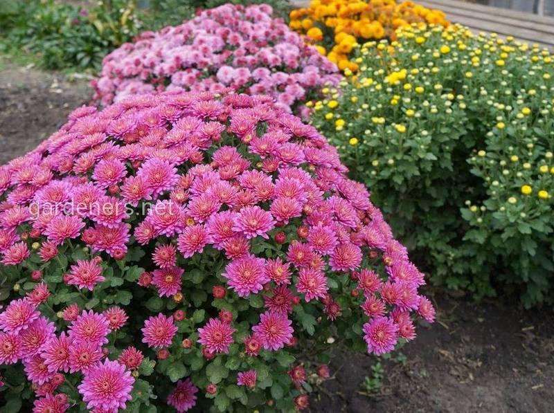 Какие работы необходимо выполнить в саду в августе? Как правильно собрать и хранить семена?