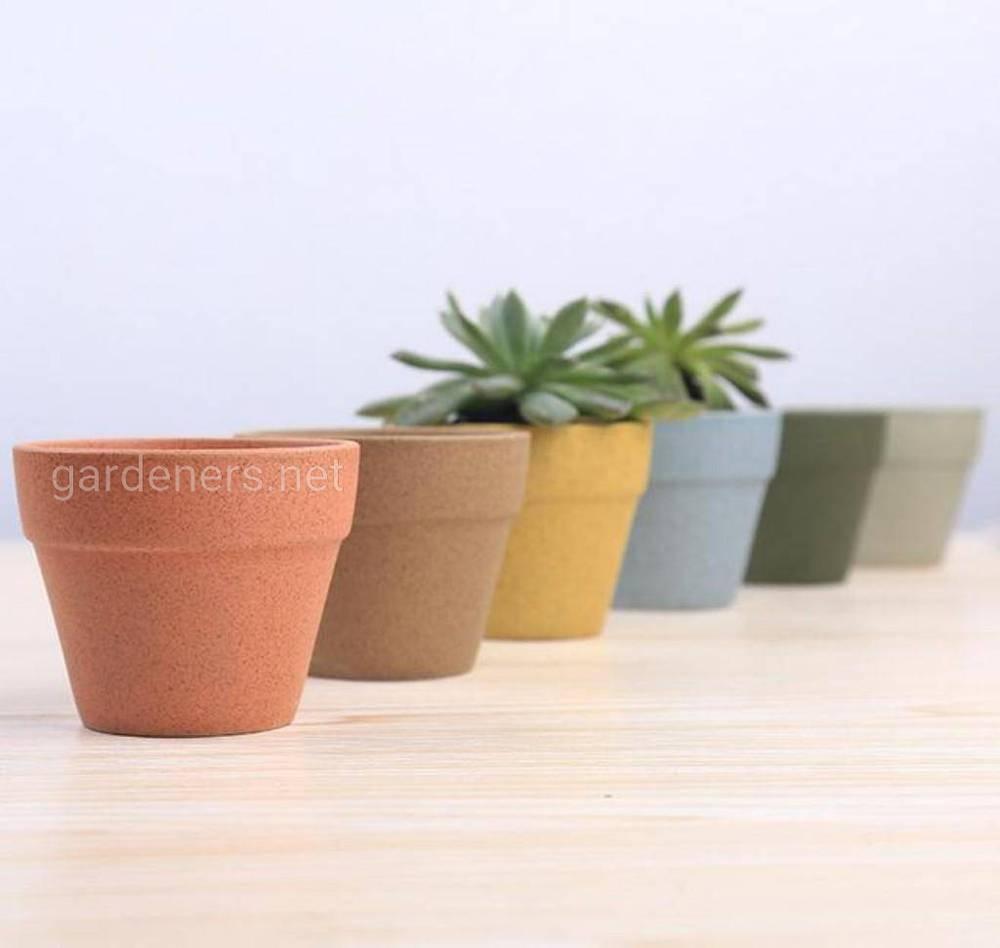 Горшки из глины и керамики для суккулентов