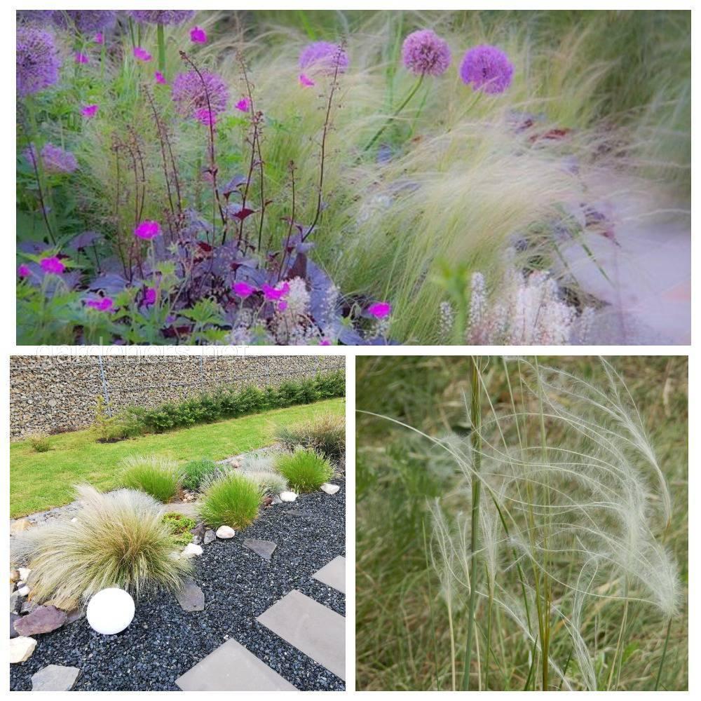 трава ковыль тончайший в ландшафте