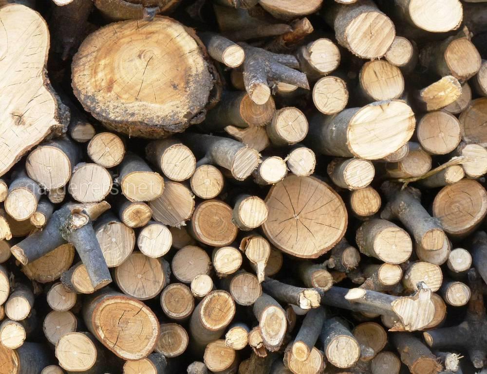 Разновидности дров по породе