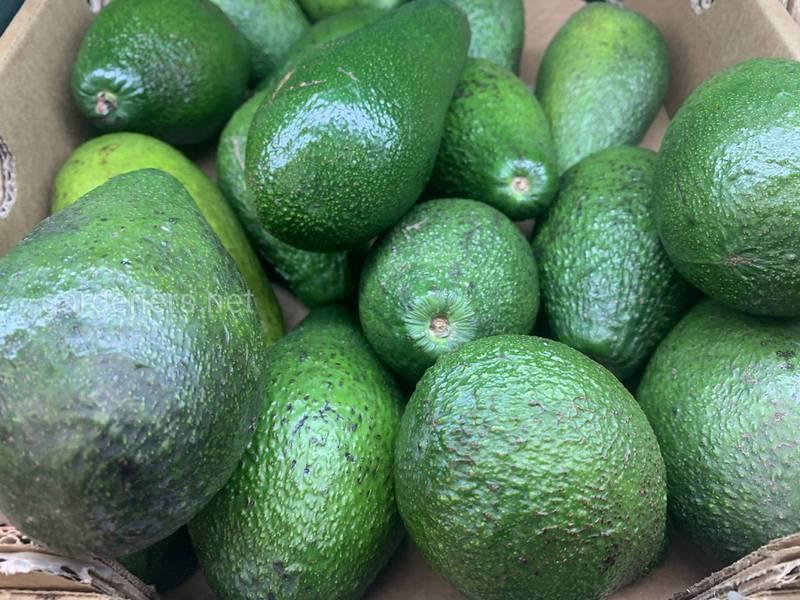 ТОП-11 корисних властивостей авокадо для вашого здоров'я