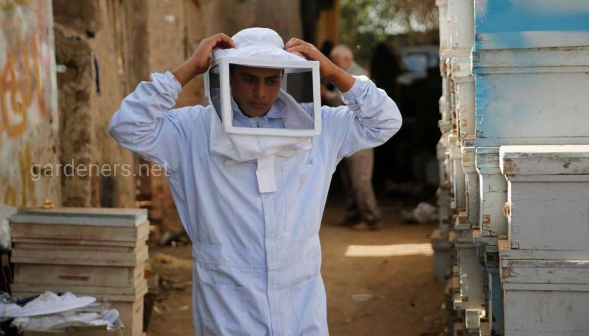 пчеловодство в Египте