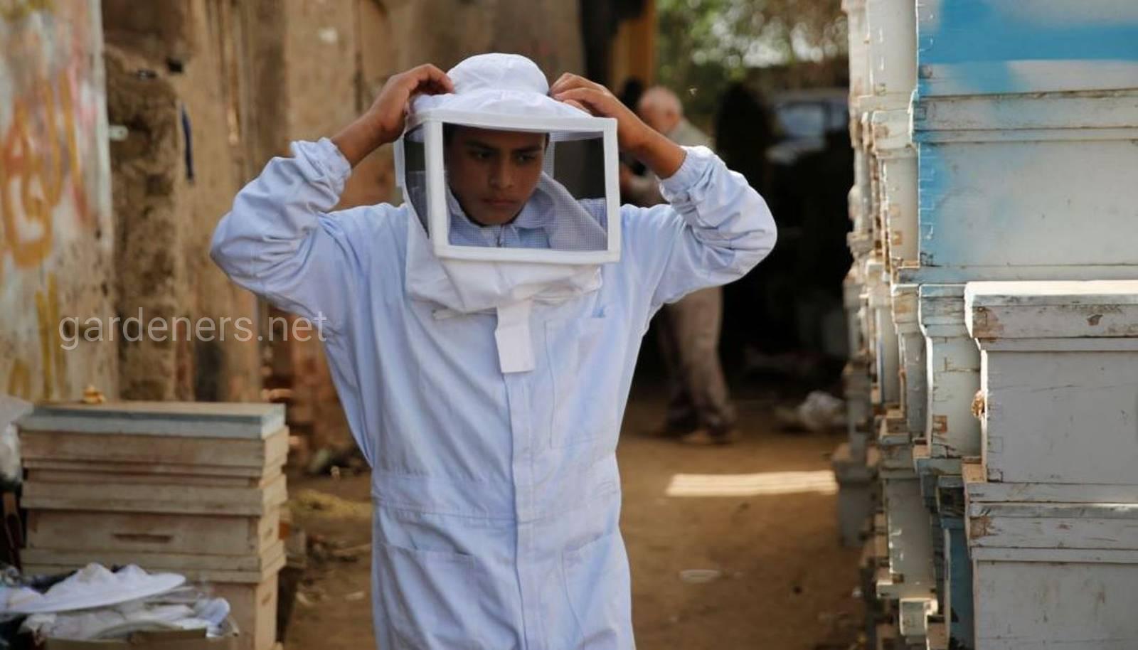 пчеловодство в Египте.jpg
