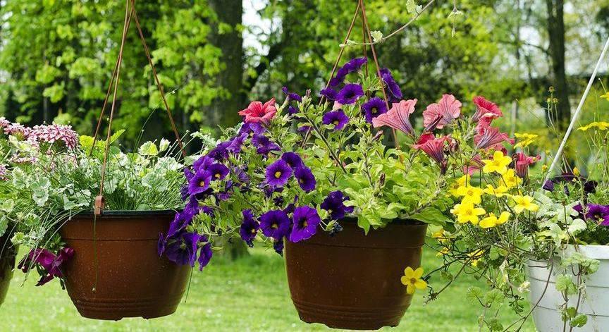 Как сохранить цветы в подвесных кашпо во время отпуска