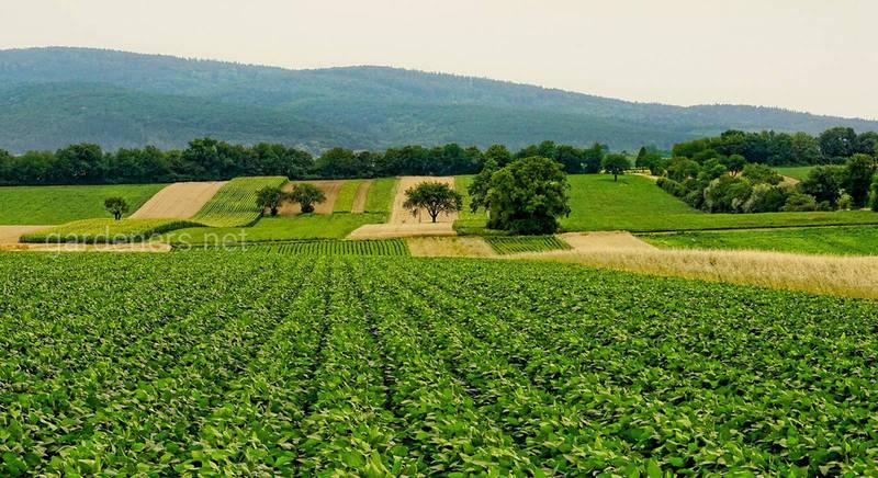 Агробизнес для новичков: с чего начать и куда бежать