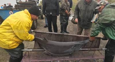 Хлорела – органічний метод очищення рибогосподарських водойм