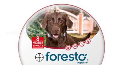 Форесто-защита от клещей и блох весь сезон