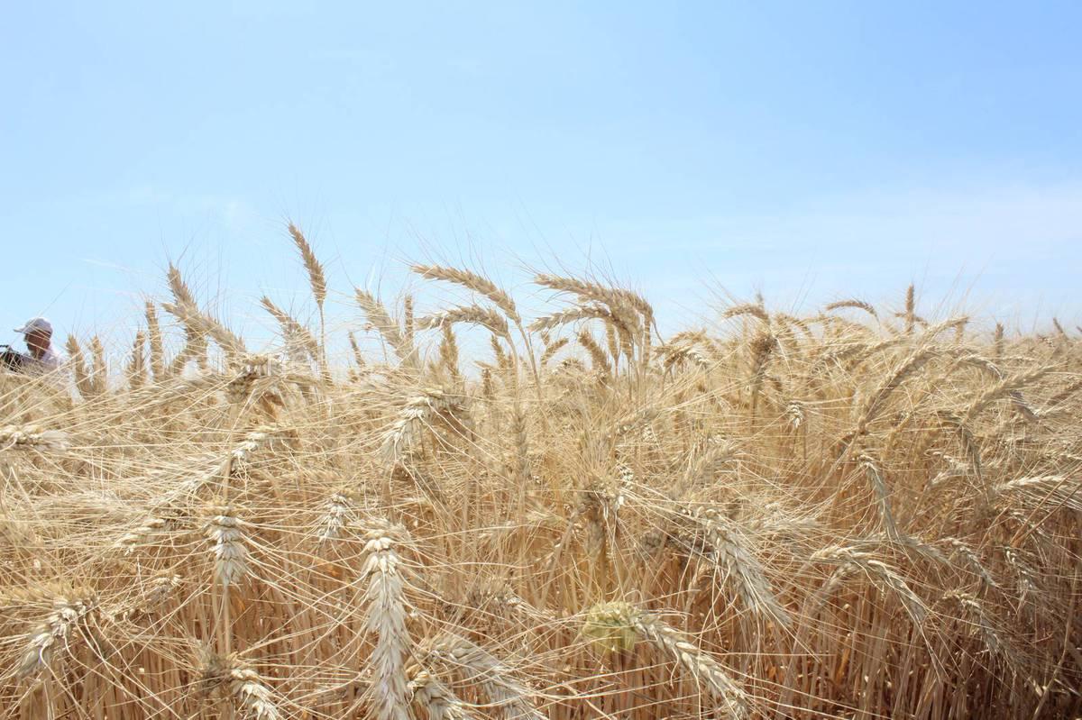 ідвищення урожайності