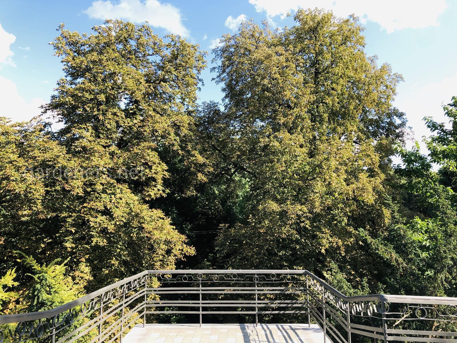 Смотровая площадка в Ботаническом саду им Фомина