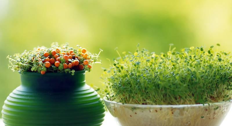 Правильно удобряем растения на подоконнике