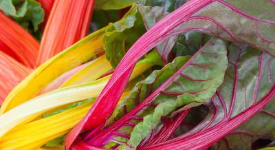 mangold-novye-recepty-salatov.jpg