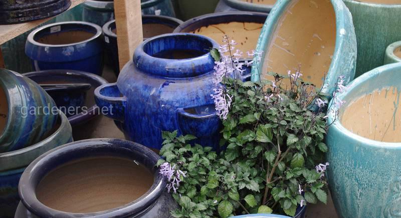 Кашпо для горщикових рослин