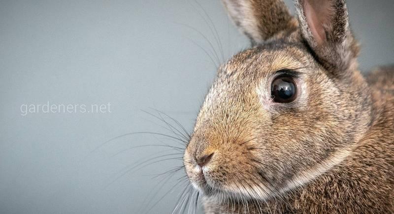 Как приготовить подкормку из кроличьего помета
