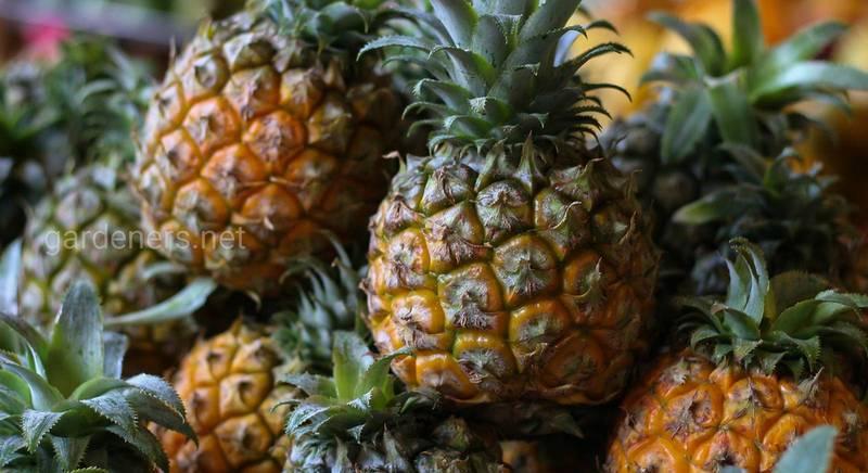 33 простых трюка с растениями, которые нельзя пропустить