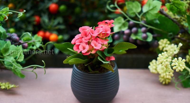 Як розпізнати шкідників кімнатних рослин?