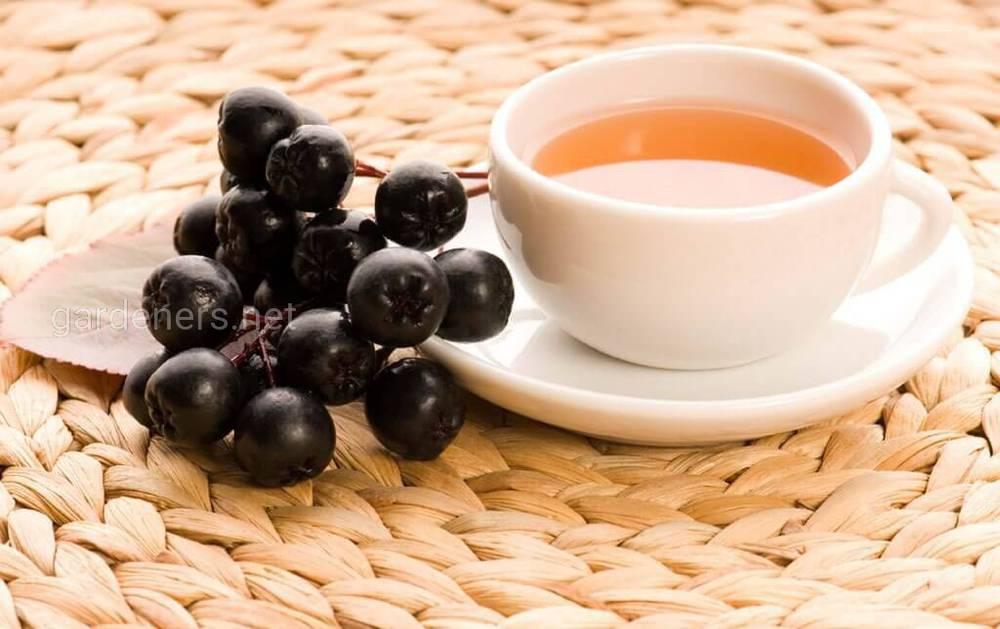 Чай из побегов черноплодной рябины