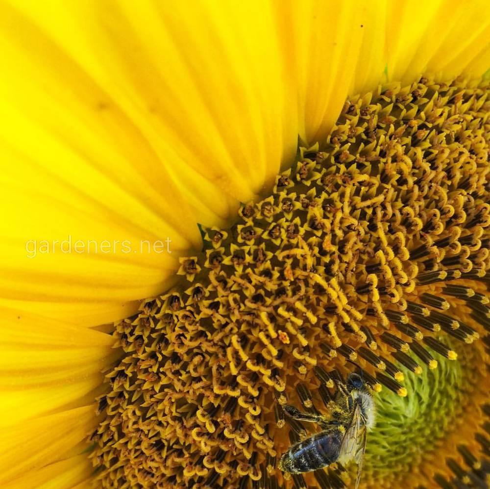 Покращення кормової бази для бджіл.jpg