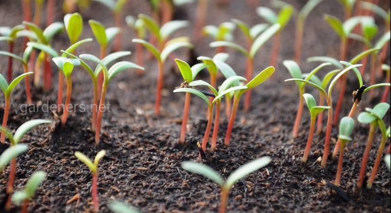 почва для рассады.jpg