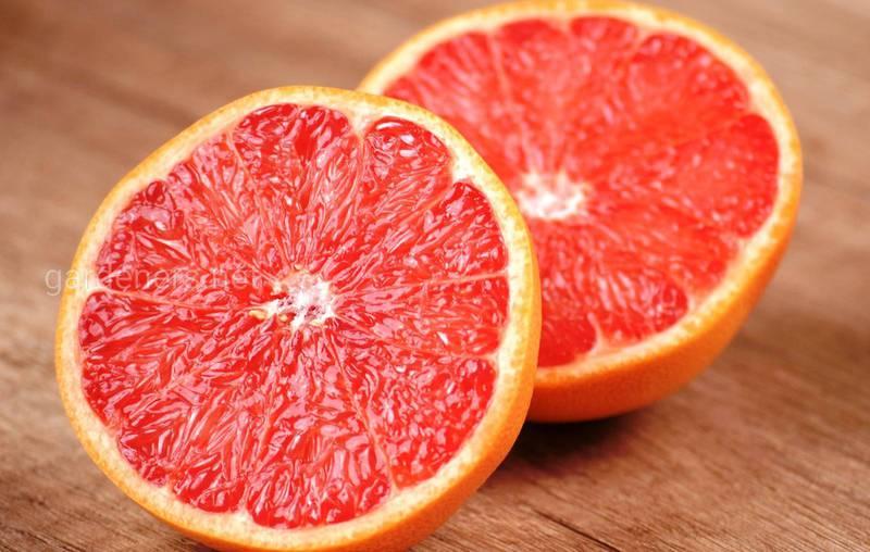 Як правильно вирощувати та доглядати за плантаціями грейпфруту?