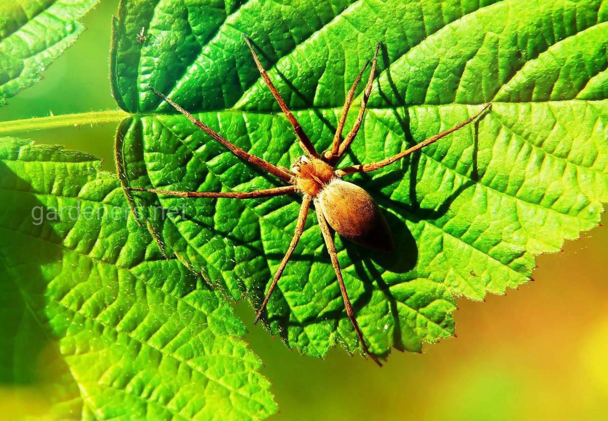 Почему нельзя убивать домашних пауков