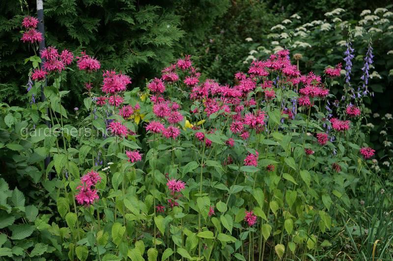 Какие растения имеют цитрусовый аромат?