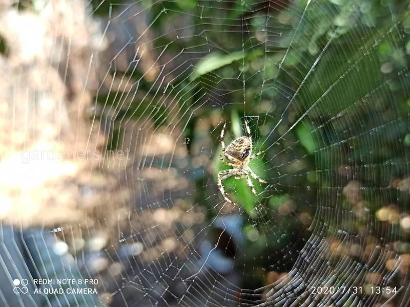 Які комахи корисні для вашого садку?