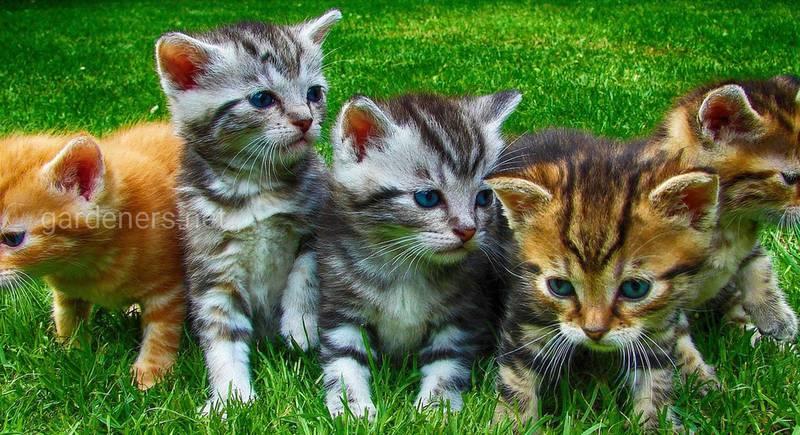 Виховання кошеняти. Частина 2