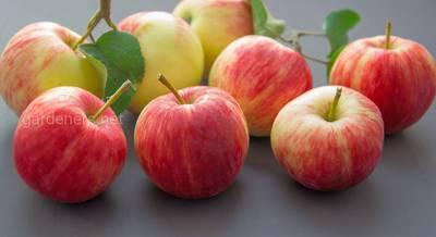 польза яблок.jpg