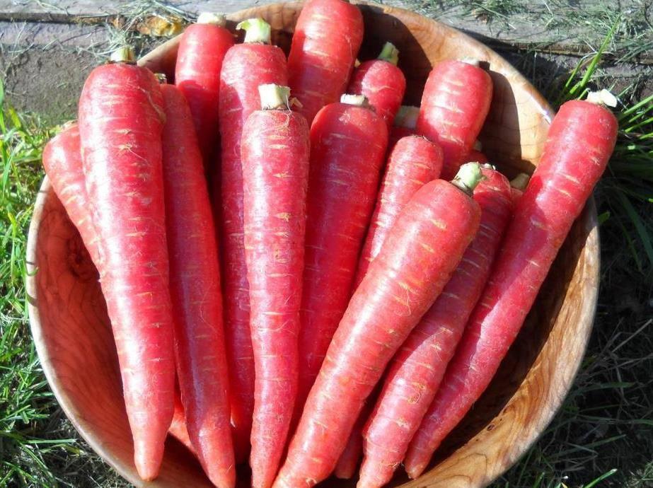 Сорт моркови Atomic Red