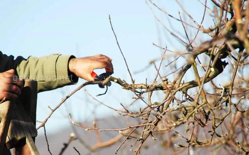 Какие работы нужно делать в саду  и огороде в феврале?