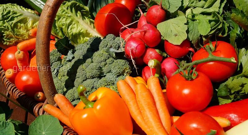 выращивании овощей на продажу