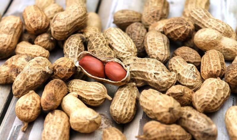 Когда собирать и как правильно хранить арахис?