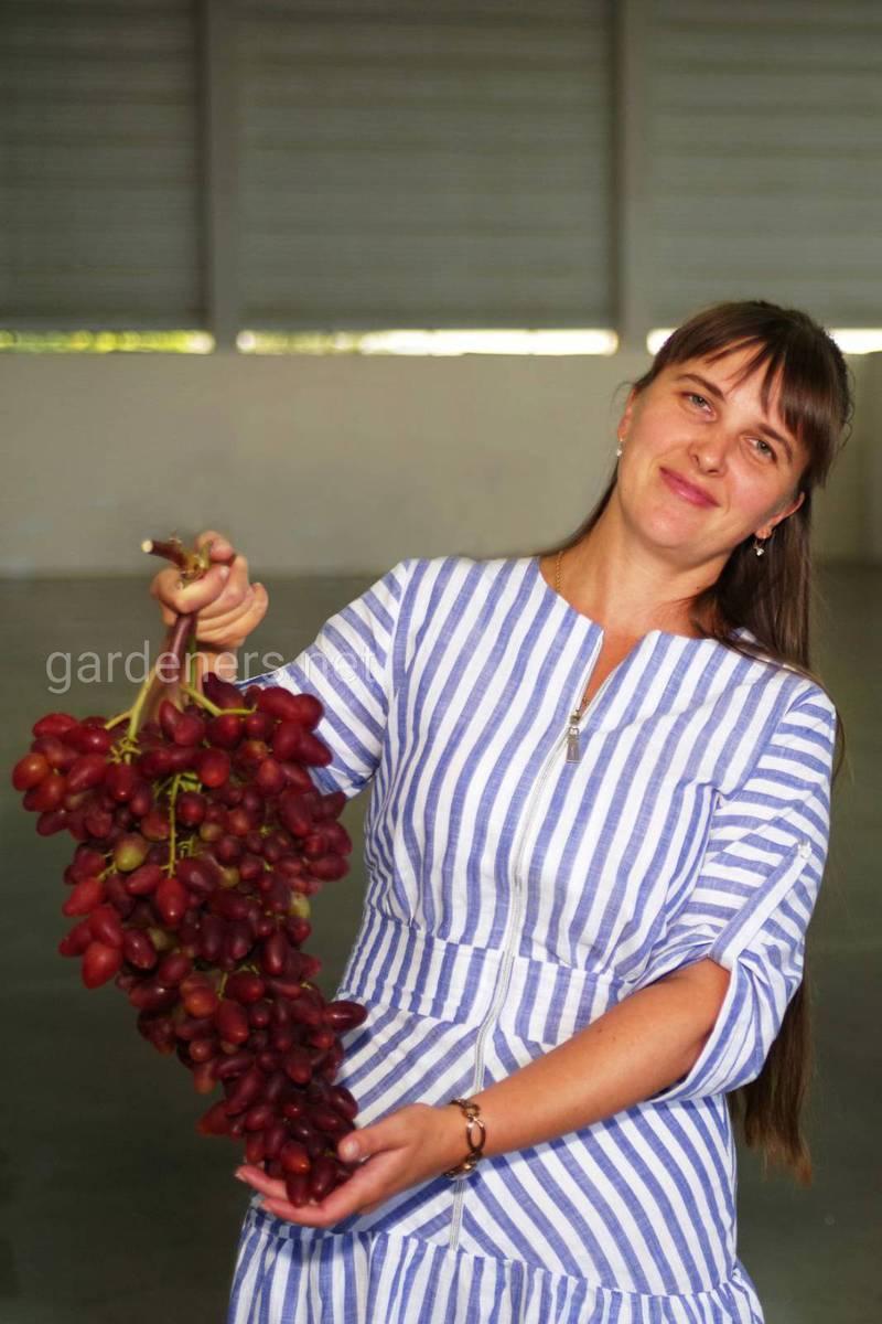 Мечта многих , виноград