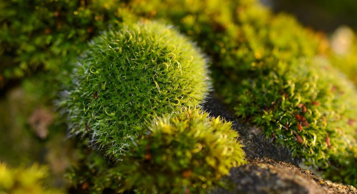 почему появляется мох на огороде