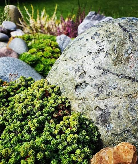 Рокарий: составляем план композиции из растений и камней