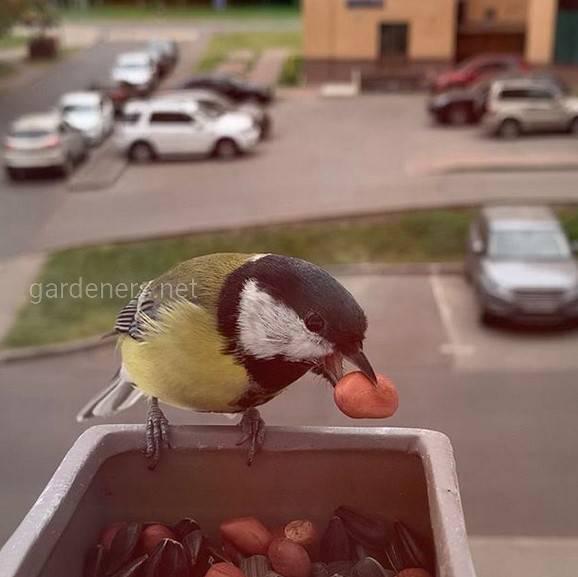 Чем кормить птиц зимой.