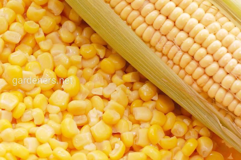 Фосфор в складі кукурудзяної крупи