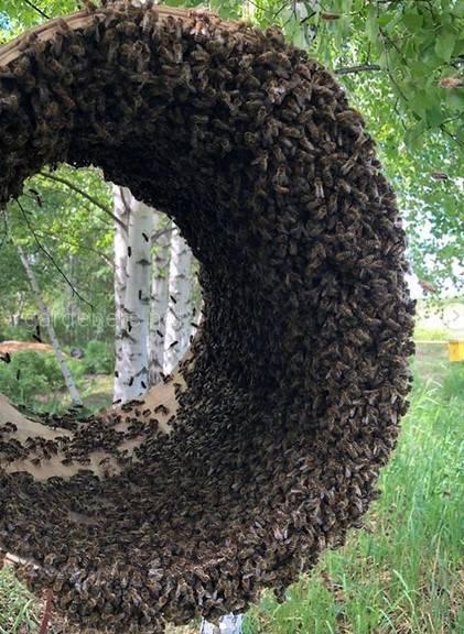 Роевня для пчел
