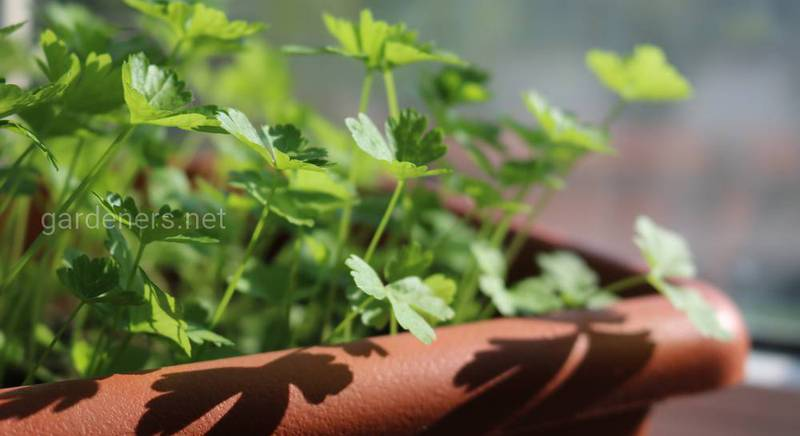 Сочная зелень круглый год