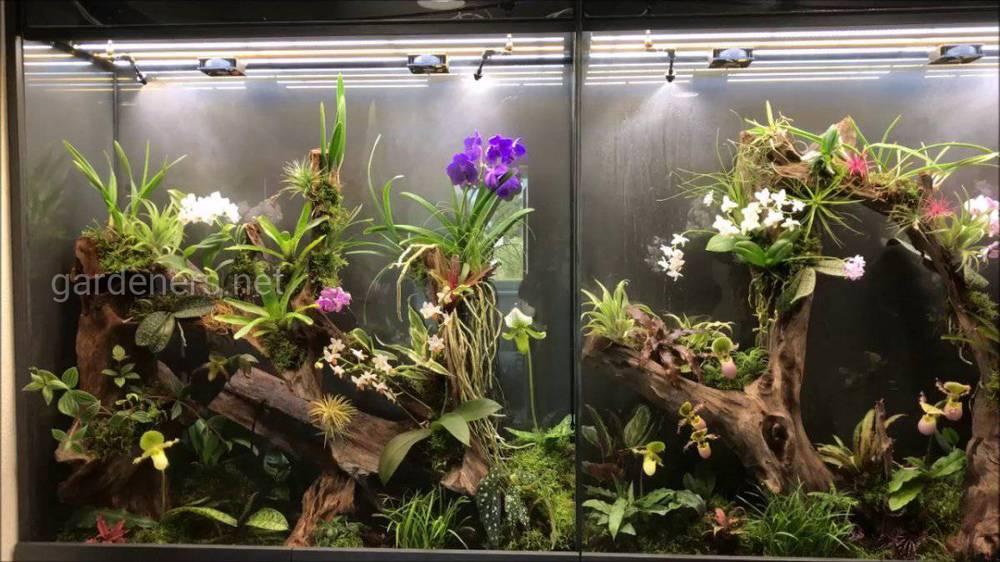 Орхидея в террариуме