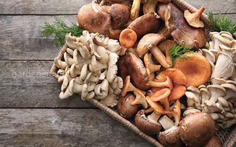 Грибний крем-суп з білих грибів
