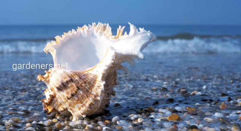 Морской воздух — это природный антиоксидант.